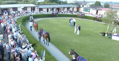 Wexford: Tuesday card in doubt