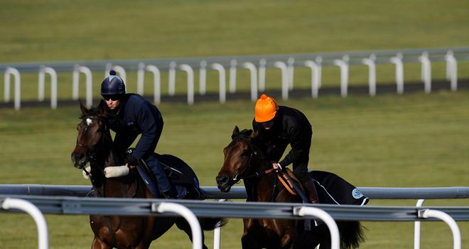 Carlton House (orange) on the gallops
