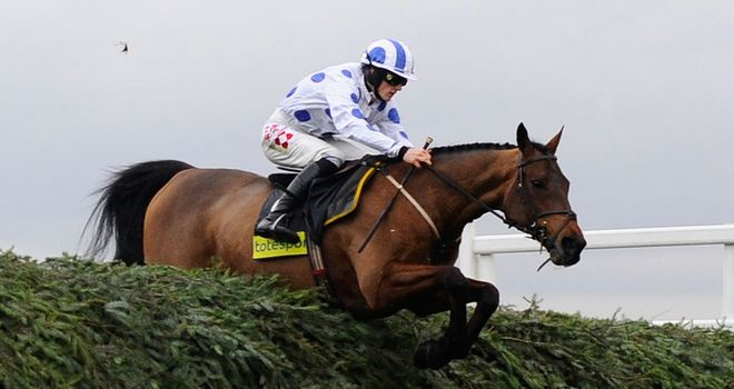 Hello Bud: One of two Cross Country entries for Nigel Twiston-Davies