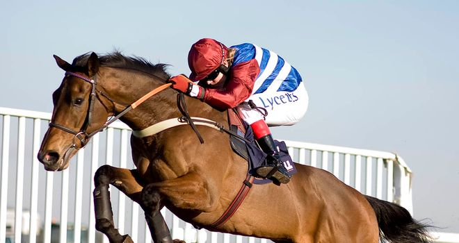 Grumeti: looking good for Cheltenham tilt