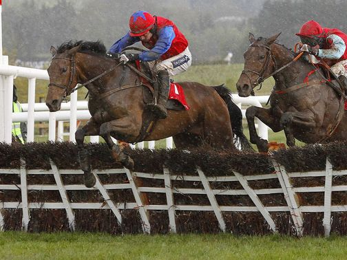 Quevega: On track for the OLBG David Nicholson Mares' Hurdle