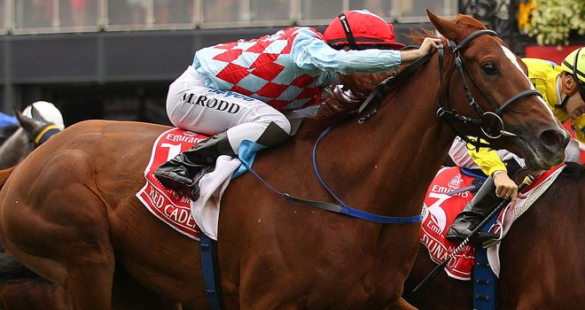 Red Cadeaux: a likely winner at Newmarket, says Alex