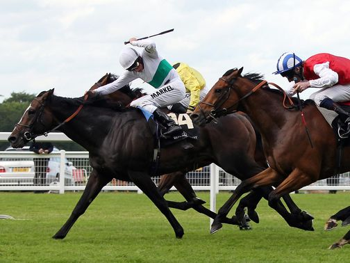 Black Spirit: Selected to win the DFS Handicap at Doncaster