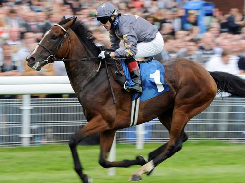 Mount Athos: Looks a well handicapped horse and should act on the track
