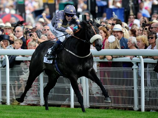 Masamah: Can claim the Beverley Bullet