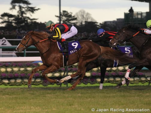 Orfevre: Expected to improve (photo courtesy of the Japanese Racing Association)