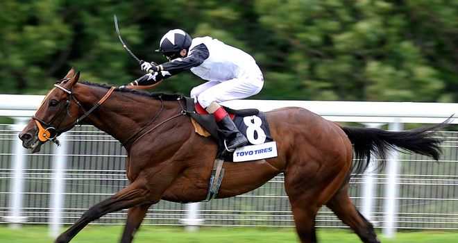 Motivado: One of the co-favourites for the Cesarewitch