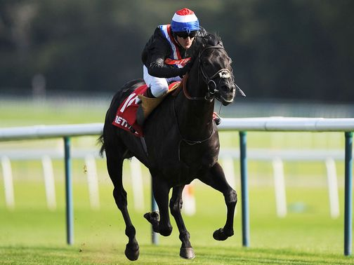 Society Rock: Could line up at Ascot on Saturday