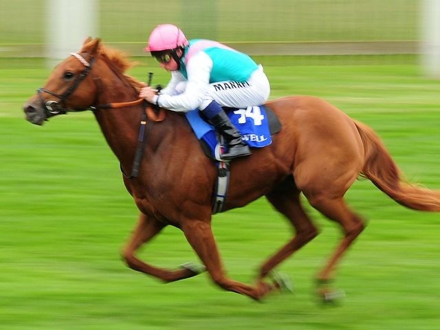 Seek Again makes a sparkling winning debut for the Gosden stable