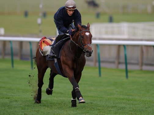 Frankel: Faces a rival right out of the top drawer