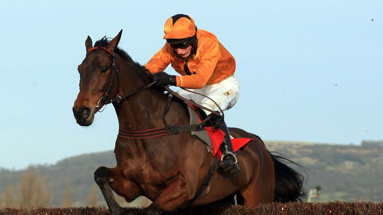 Maljimar: Runs at Cheltenham next month in cross-country chase
