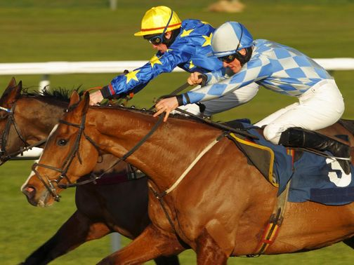 African Gold: Could end up at the Cheltenham Festival