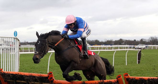 Irish Saint: Represents Paul Nicholls in the Adonis