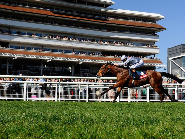 Olympic Glory: Could be Richard Hannon's sole runner on Champions Day