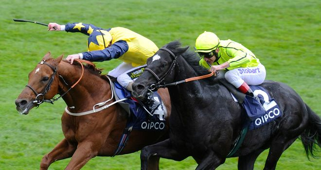 Dandino (right): Melbourne Cup aim