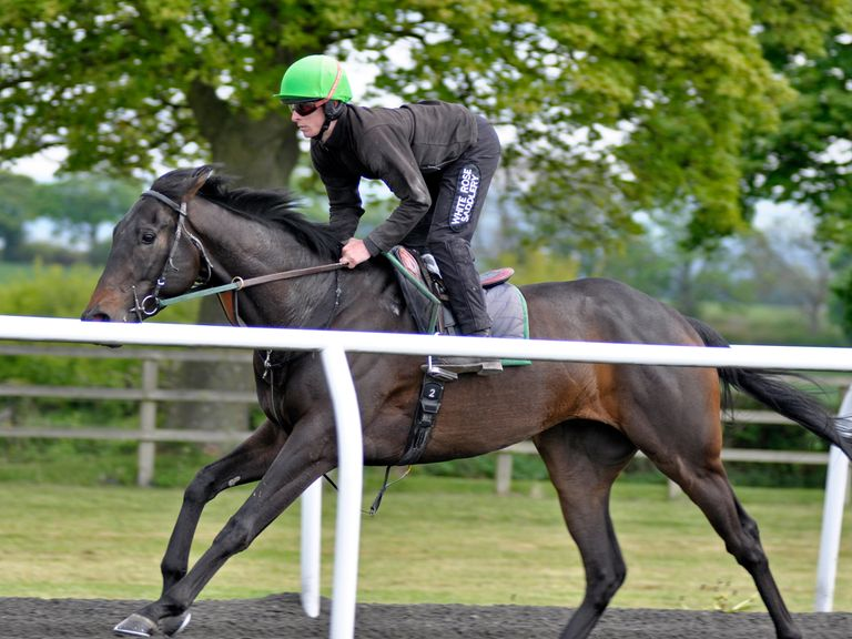 Manchestar on the gallops at Richard Fahey's yard (Sal Smithson)