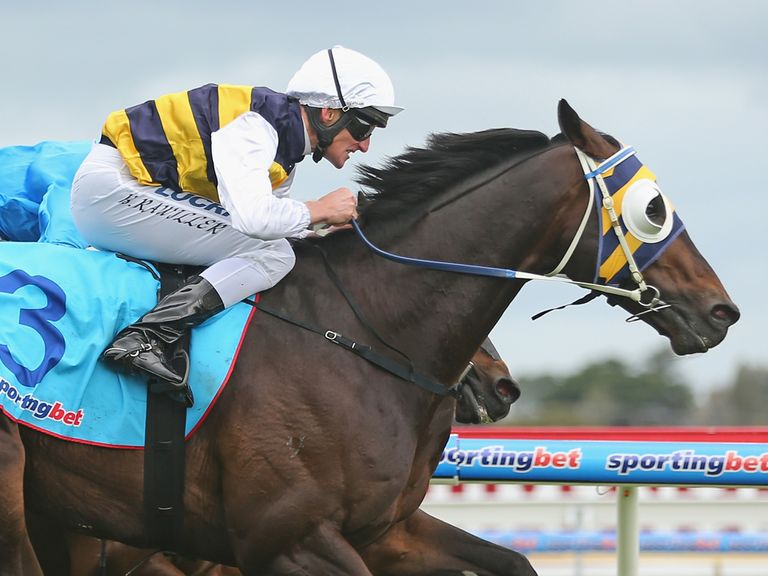 Ibicenco comes out on top in the Geelong Cup