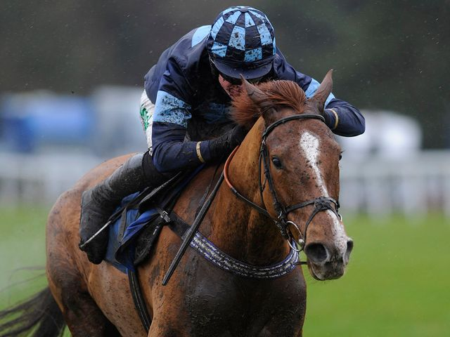 Melodic Rendezvous: Champion Hurdle Trial winner