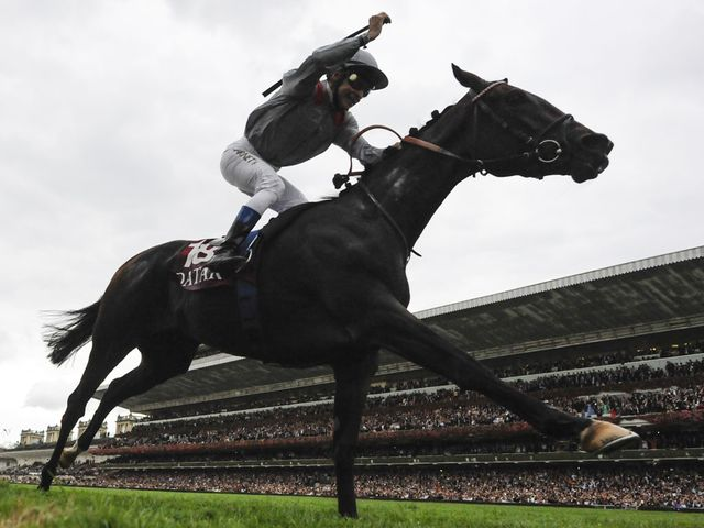 Treve: carrying plenty of confidence ahead of Ascot race