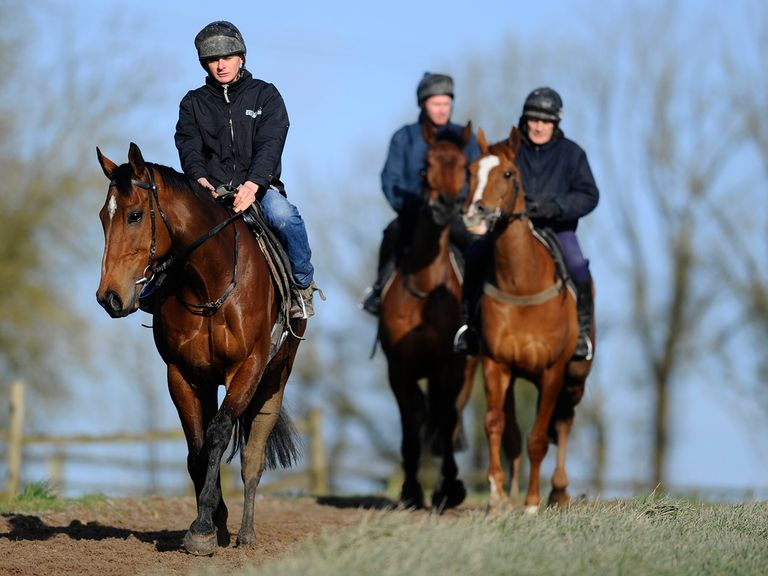 The New One heads the Twiston-Davies team at exercise