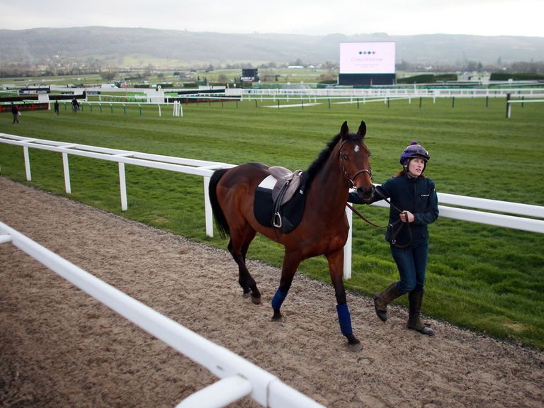 Cheltenham's ground is set to dry out further later in the week