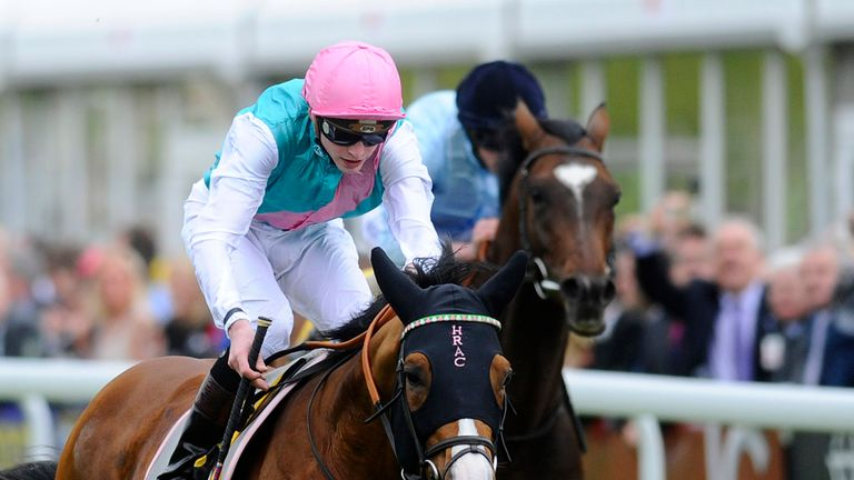 Noble Mission could run at Saint-Cloud this weekend.