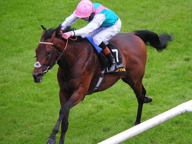 Kingman wins at the Curragh