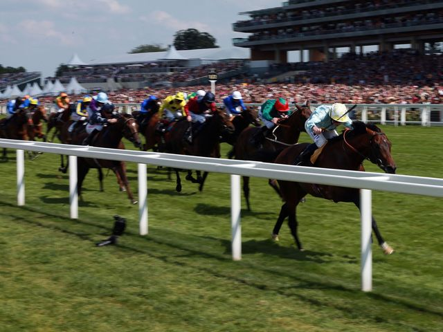 Arab Spring: Could be seen at Longchamp later in the season