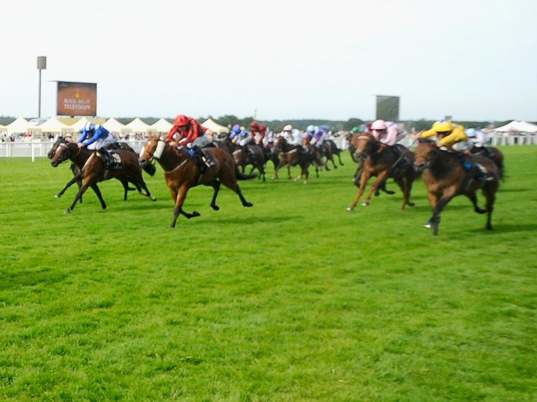 Haxby (far right) can land the Weatherbys Super Sprint on Saturday.