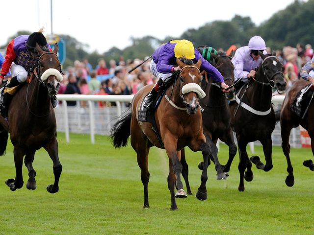 Pale Mimosa ridden by Pat Smullen (centre, yellow cap) wins the Weatherbys Hamilton Insurance Lonsdale Cup
