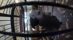 Sick as a parrot