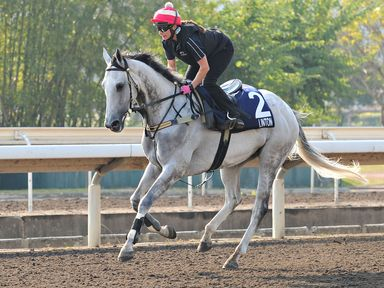 Carolyn Mason riding Linton on the All Weather Track during a Hong Kong International Trackwork Session