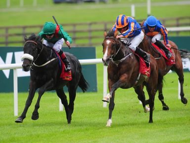 Harzand has been retired to stud