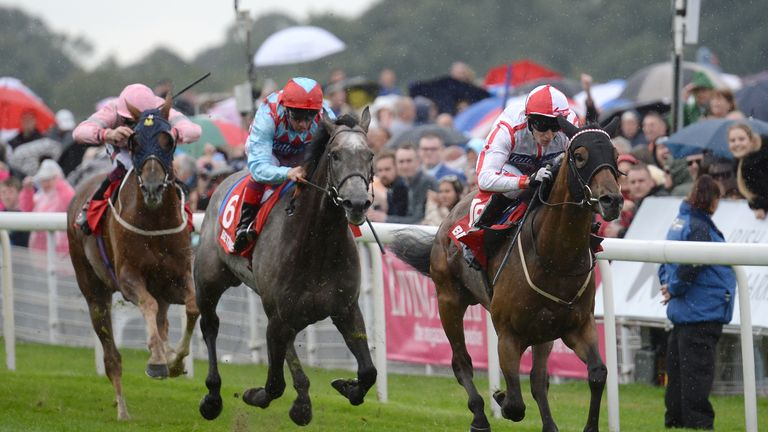 Scarlet Dragon is due to run in the Qatar Derby