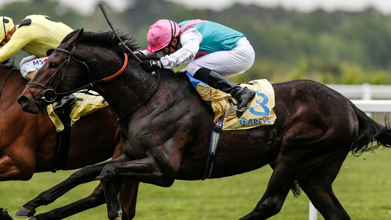 Mirage Dancer: Fancied to strike at Newmarket this week