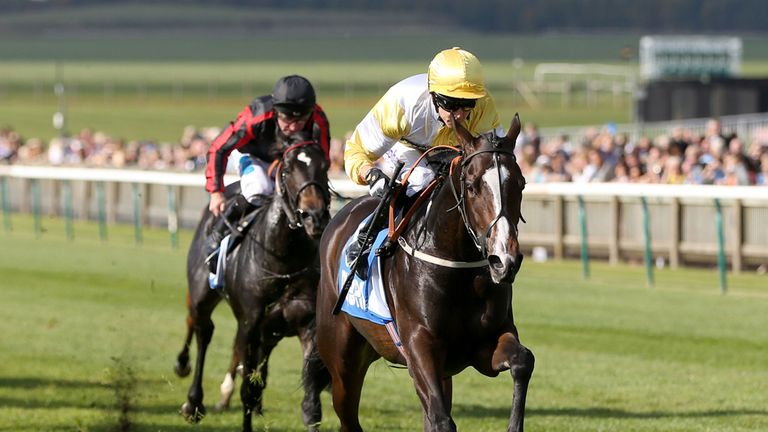 Quiet Reflection: Will be tested over six furlongs