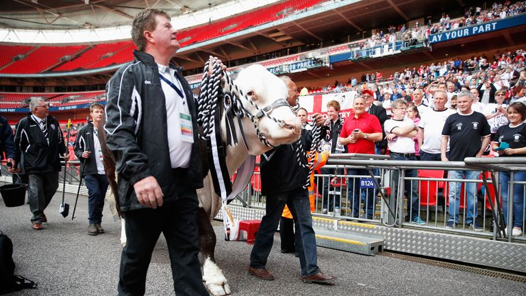 Hereford FC mascot 'Hawkesbury Ronaldo' is paraded in front of fans