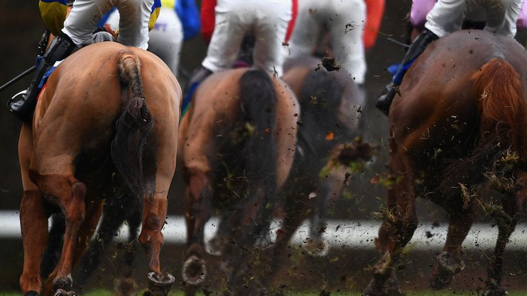 They're off: Racing shuts down over horse flu
