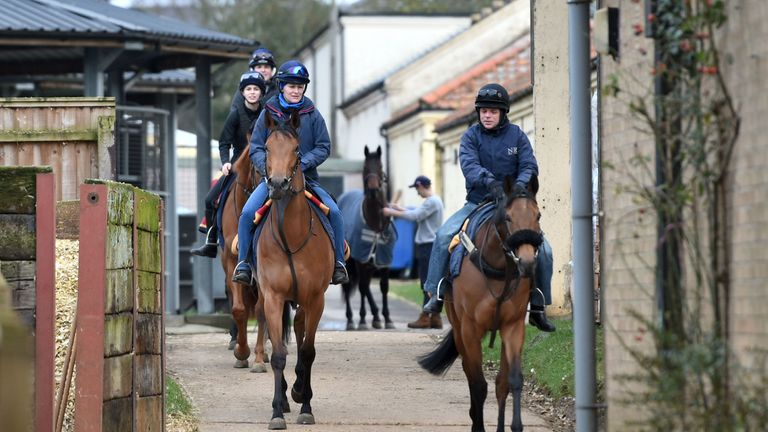 Horses leave their yard in Newmarket on Monday morning