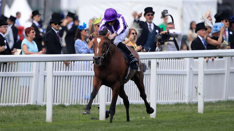 Aidan O'Brien ponders next race for Ascot hero Japan