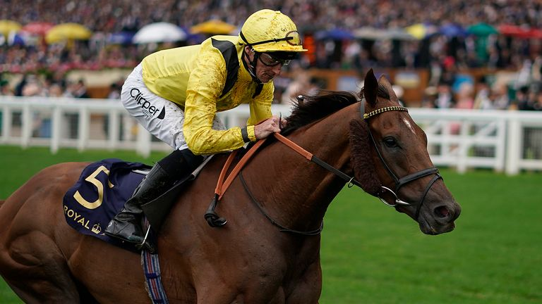 Addeybb, pictured here winning at Royal Ascot, heads the field for the Champion Stakes at Ascot
